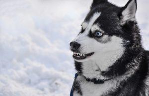 aengstlichem hund halsband anlegen