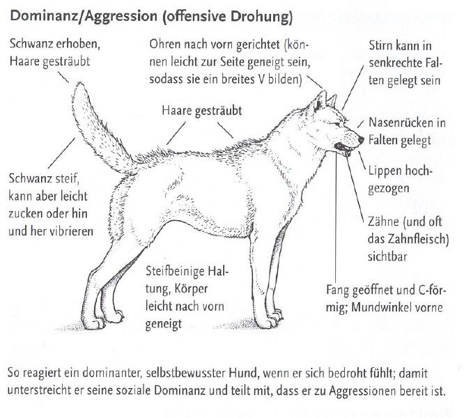 Prächtig Körpersprache beim Hund | Hundefreunde Wörnitzgrund #RC_25