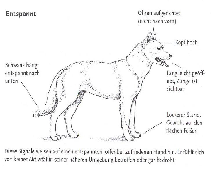 Super Körpersprache beim Hund | Hundefreunde Wörnitzgrund @NF_64