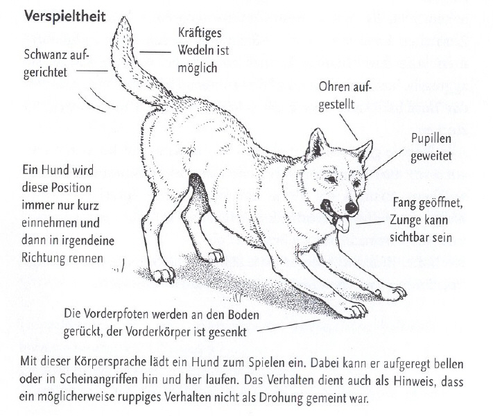 Geliebte Körpersprache beim Hund | Hundefreunde Wörnitzgrund @BF_07